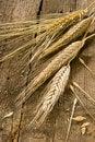 Free Corn Stock Photo - 10216160