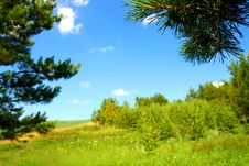 Free Summer Landscape With Pine Branch Royalty Free Stock Photography - 10210667