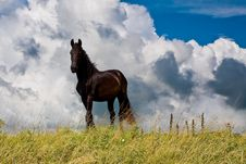 Free Countryside With A Horse On Dike Against Clouds Royalty Free Stock Images - 10211699
