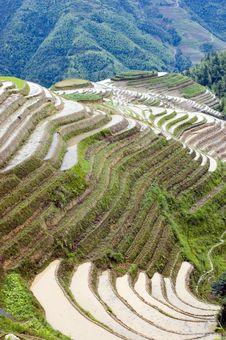 Terraced Rice Fields In Guilin, Longshan Royalty Free Stock Photo