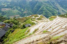 Terraced Rice Fields In Guilin, Longshan Stock Image