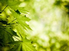 Free Green Leaves Stock Photography - 10212362