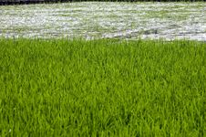 Chinese Rice Fields In Guilin Stock Photo