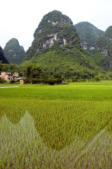 Free Chinese Rice Fields In Guilin Royalty Free Stock Photo - 10212495