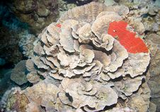 Ocean And Coral Royalty Free Stock Photos
