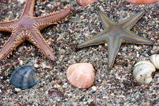Free Sea Star Royalty Free Stock Photo - 10213155