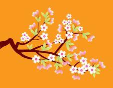 Free Sakura Stock Photos - 10213413