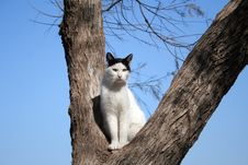 Free Cat On A Tree Stock Image - 10214221