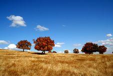 Van S Track On The Vast Grassland In Autumn Stock Photography