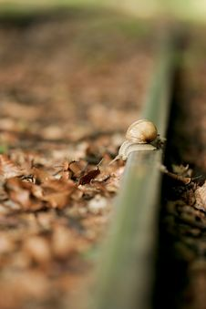 Free Snail On Rail Stock Photography - 10214622