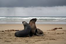 Free SEA LION Stock Photos - 10214683
