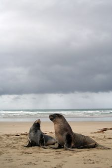 Free SEA LION Stock Images - 10214764