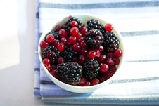 Free Redcurrants And Blackberries Royalty Free Stock Images - 10215469