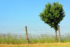 Free Tree Stock Image - 10217011