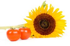 Big Sunflower And Fresh Tomatoes Royalty Free Stock Photo