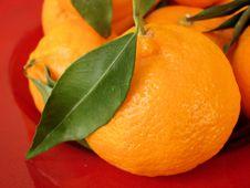 Mandarin Tangerine Stock Image