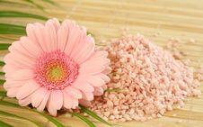 Free Pink Bath Salt And Pink Gerber. Stock Photos - 10218593