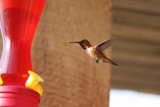 Free Hummingbird At The Feeder Royalty Free Stock Image - 10219916