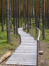 Free Walking Path In The Forest Stock Photo - 10222930