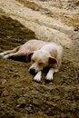 Free Sleeping On A Rough Road Stock Photos - 10228343