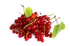 Free Red Currants Royalty Free Stock Images - 10220759