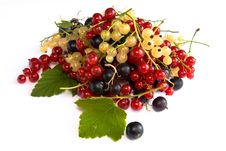 Free Still Life With Currants Stock Photo - 10220760
