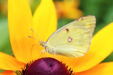 Free Butterfly Feeding Royalty Free Stock Image - 10221696