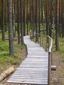 Walking Path In The Forest Stock Photo