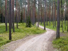 Free A Road In The Forest Royalty Free Stock Photography - 10222937