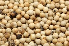 Free White Pepper Royalty Free Stock Images - 10223519
