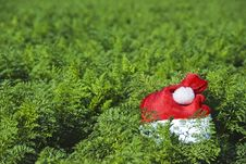 Free Santa S Hat In A Farm Field Royalty Free Stock Photography - 10224957