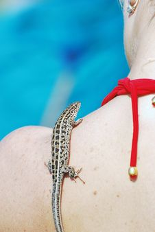 Free Lizard On The Shoulder Royalty Free Stock Photography - 10225957