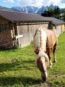 Free Horse Grazing Stock Photo - 10226270