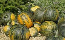 Free Harvest Background Stock Photo - 10226480