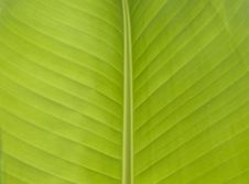 Free Banana Leafs Background Royalty Free Stock Image - 10226736