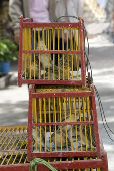 Free Cages In The Thai Monastery. Royalty Free Stock Image - 10226816