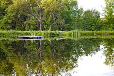 Tranquil Pond Royalty Free Stock Image