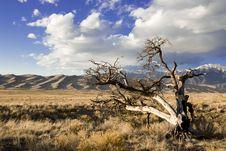 Free Sand Dune Landscape Royalty Free Stock Images - 10228879
