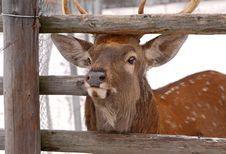 Free Deer Stock Image - 10229171