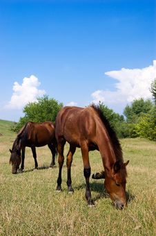 Free Mare And Its Stallion Stock Photography - 10229522