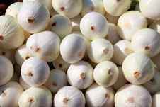 Free Peeled White Onions Royalty Free Stock Images - 10229619