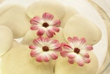 Free Spa Flower In Water Royalty Free Stock Photo - 10229655