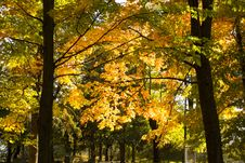 Free Autumn Trees In Quebec, Canada Stock Photo - 102226020