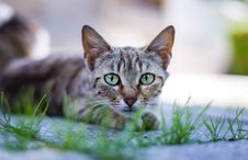 Free Animal, Blur, Cat, Cat Royalty Free Stock Photo - 102226105