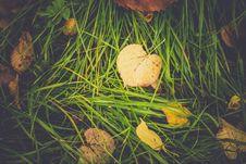 Free Yellow Autumn Leaves Royalty Free Stock Photo - 102260435