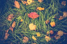 Free Yellow Autumn Leaves Royalty Free Stock Images - 102260449