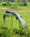 Free Marabou Stork Stock Image - 10231261
