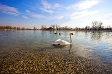 Free Swan And Duck On The Lake Royalty Free Stock Photography - 10231487
