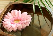 Free Pink Gerber Floating In Wooden Bowl. Stock Photo - 10232730