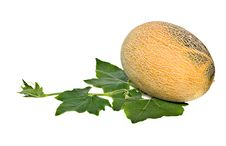 Free Melon Royalty Free Stock Image - 10235396